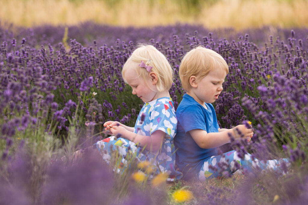Twins in lavender by Surrey photographer Rachel Thornhill