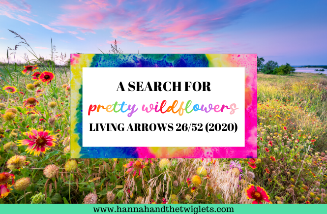 a search for pretty wildflowers
