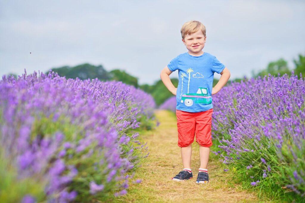 Boy standing in lavender