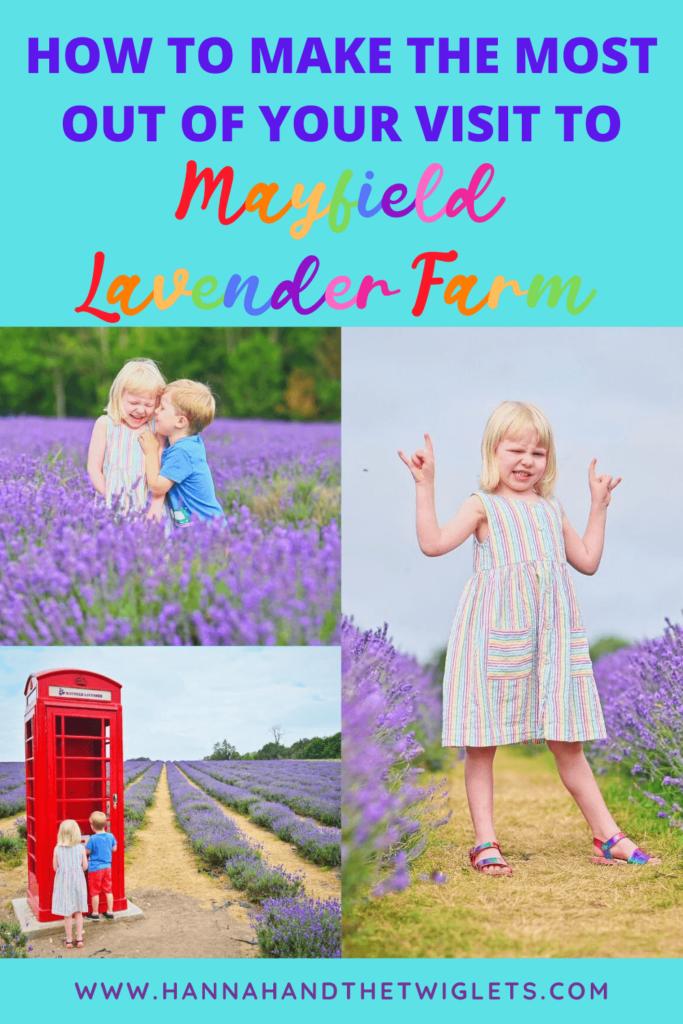 Mayfield Lavender Farm Pinterest