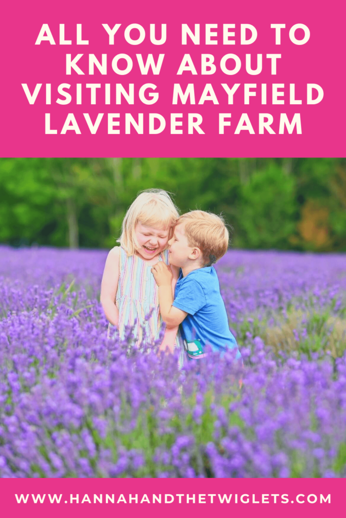 Visit to Mayfield Lavender Farm