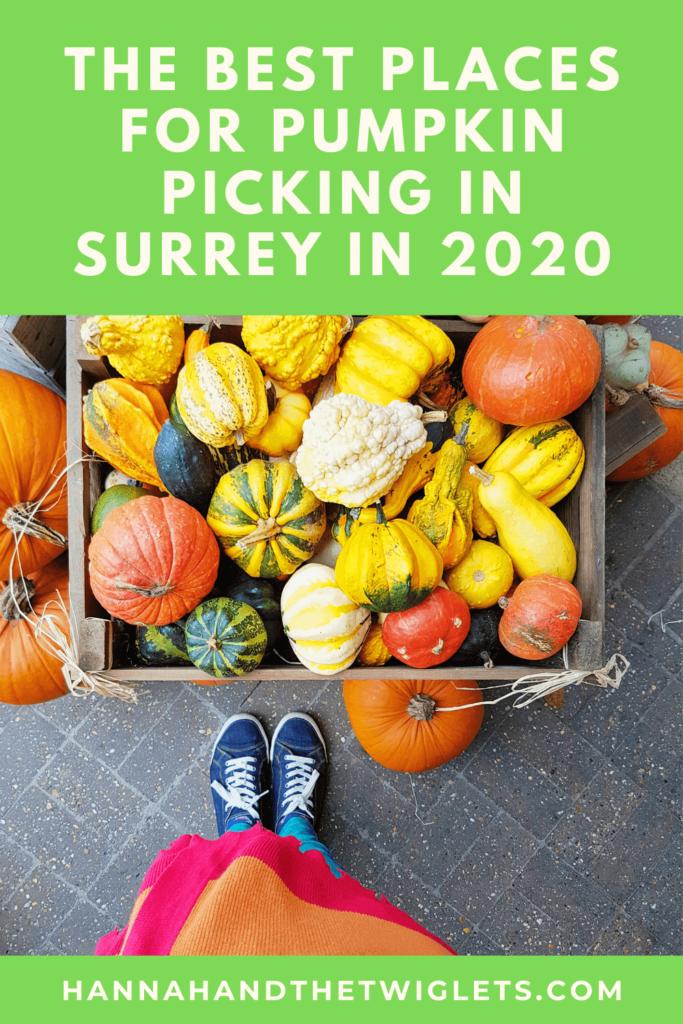 Best places for pumpkin picking in Surrey 2020 Pinterest